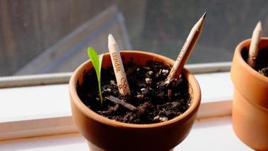 Ceruza, amiből virág nő