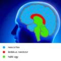 Mi végre jött létre az agy?