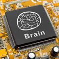 Kérdéses, hogy mai kutatási módszereinkkel megérthetjük-e az agy működését