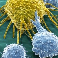 Féktelen immunrendszerrel a rák ellen