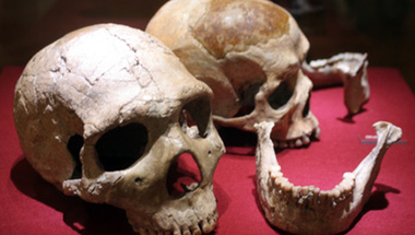 Coursera: Human Evolution - Past and Future