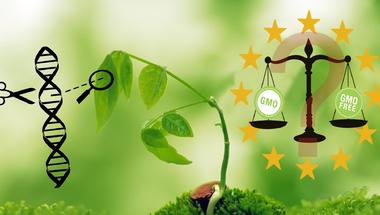 Génmódosítás-e a génszerkesztés?