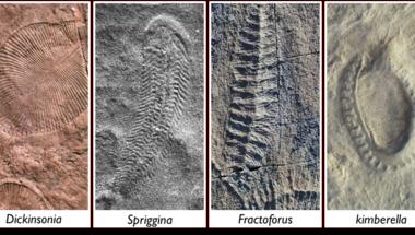 570 millió éves embriók?
