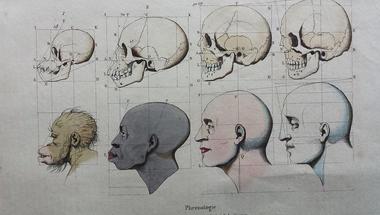 """""""Rasszok"""", gének és intelligencia - here we go again"""