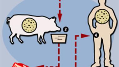 Az állat-antibiotikumok veszélyei