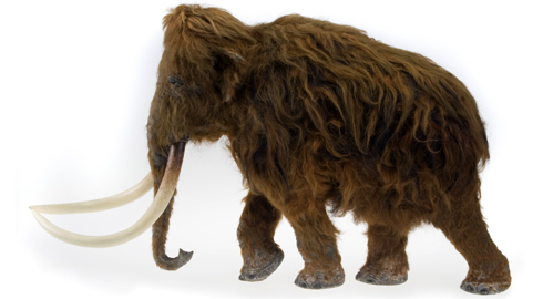 woolly-mammoth-model_82791_1.jpg