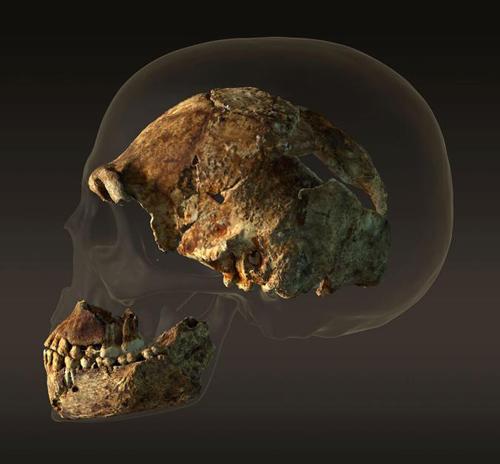 naledi_skull.jpg
