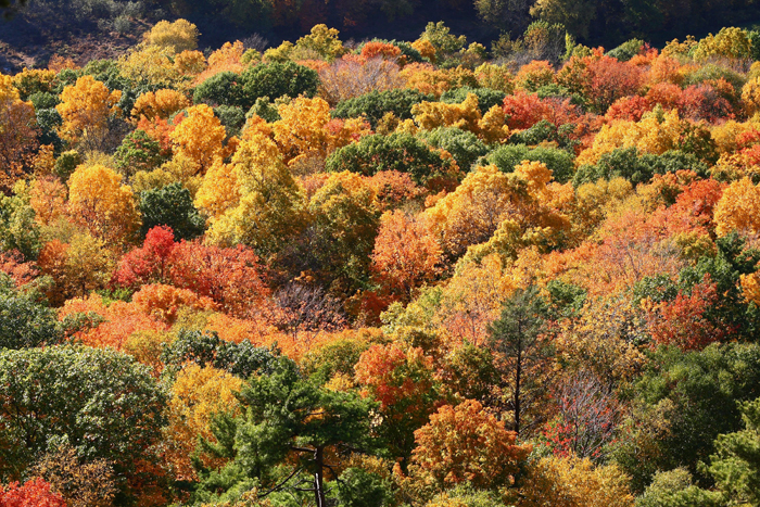 autumn_leaves_talcott_mountain_state_park.jpg