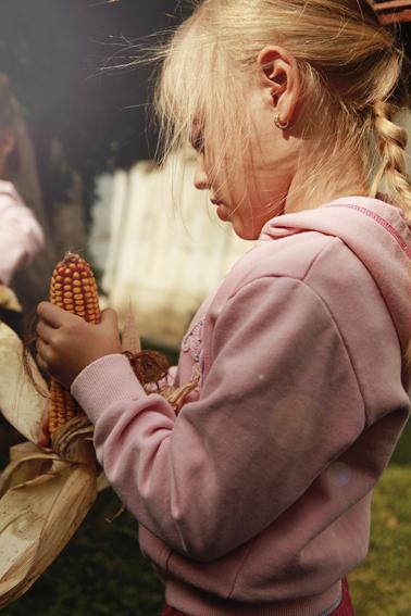 kukorica--3.jpg