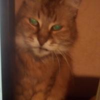 Macskául