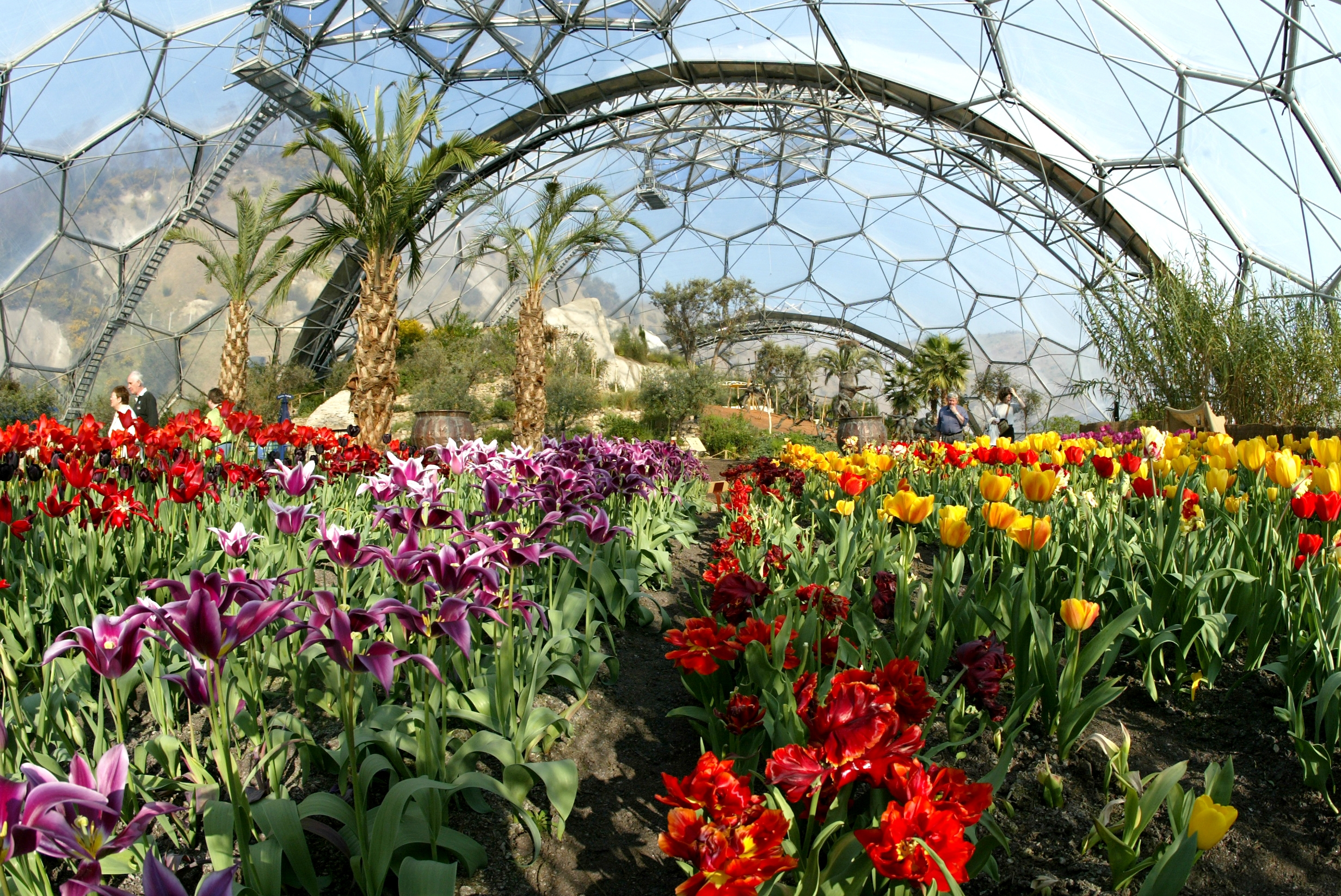 8a_-wideshot-tulips-warm-temperate-biome-credit-the-eden-project.jpg
