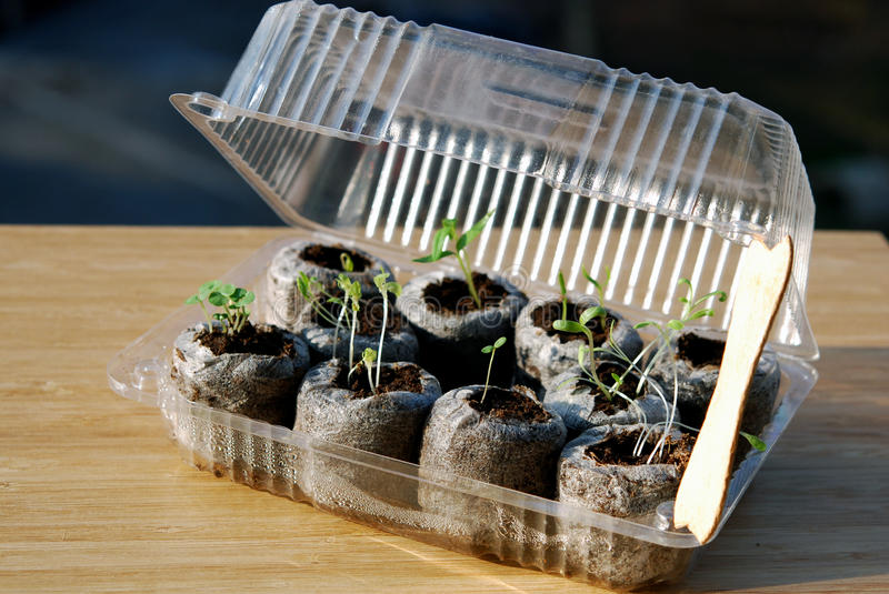 mini-greenhouse-balcony-gardening-use-waste-plastic-box-wooden-icecream-stick-38802907.jpg