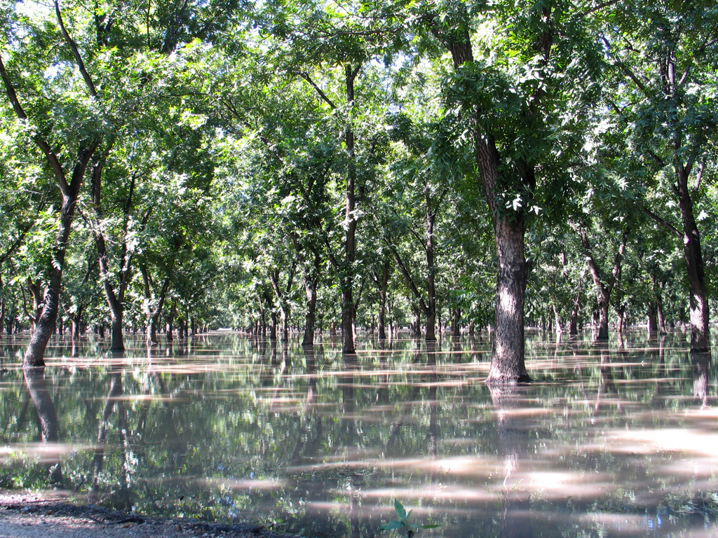 pecan-irrigation1-large.jpg
