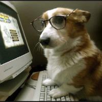 Csepeli kutyatartók figyelmébe! Kötelező adatszolgáltatás az ebekről interneten vagy postán