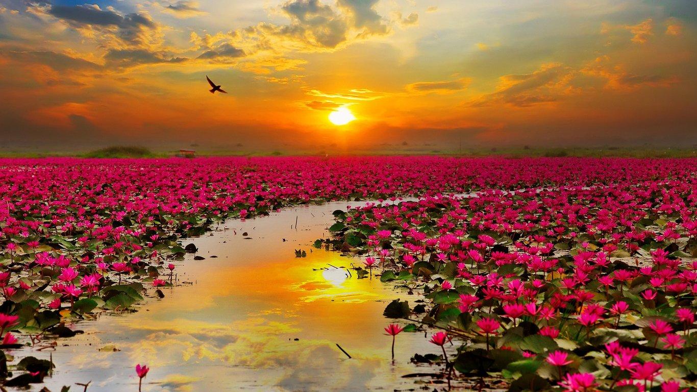 flower-river-sunrise.jpg