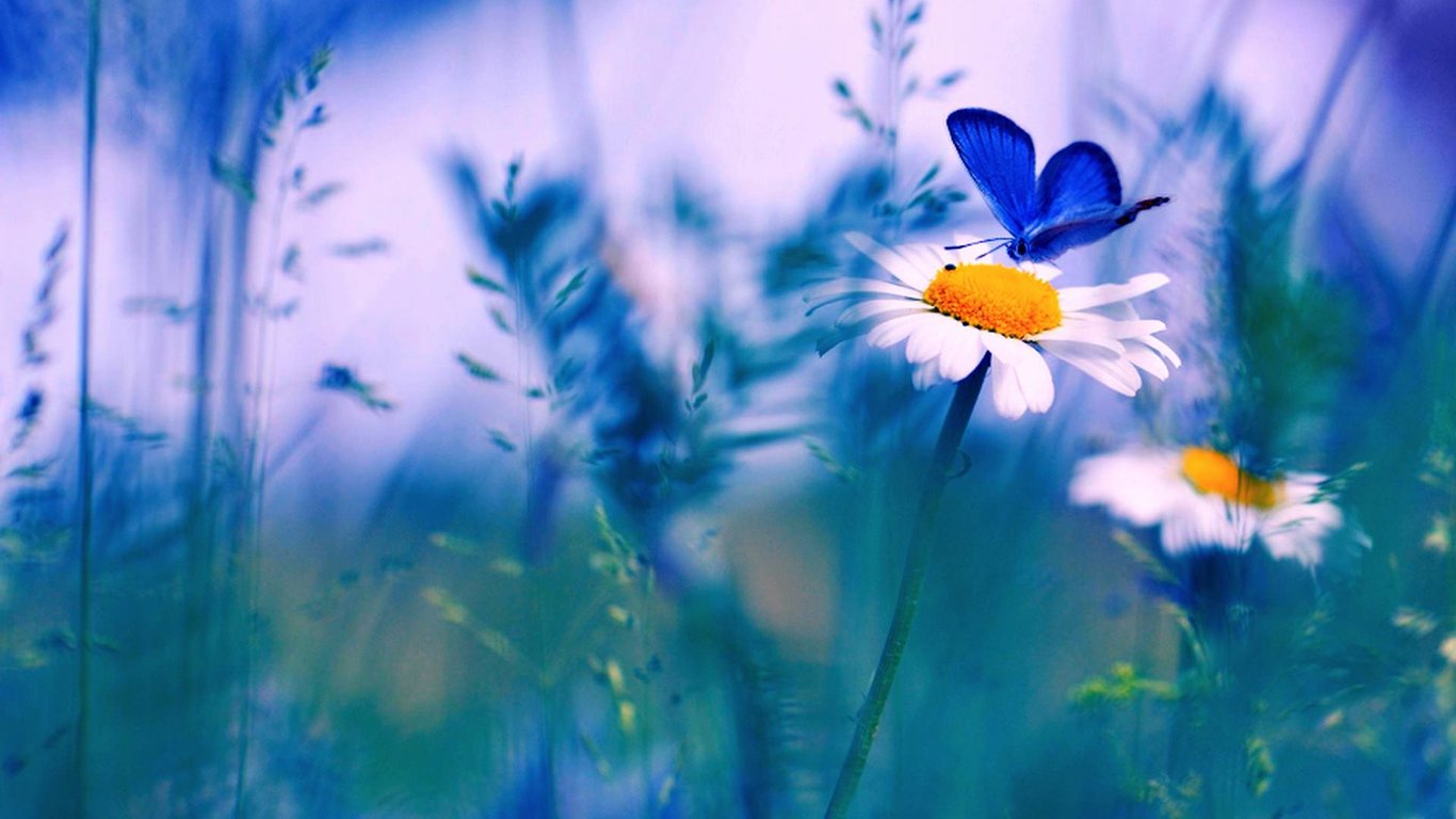margarita-butterfly.jpg