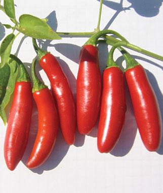 hot-pepper-serrano-tampiqueno-burpee.jpg