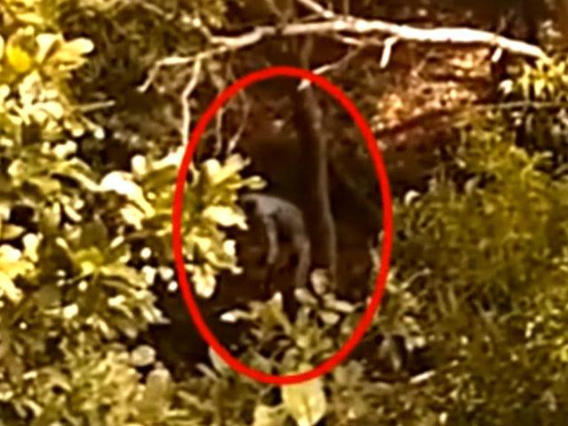 Hüllőszerű földönkívüli lény sétált bele a panorámavideóba