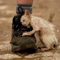 20 elgondolkodtató kép az emberi felelőtlenségről