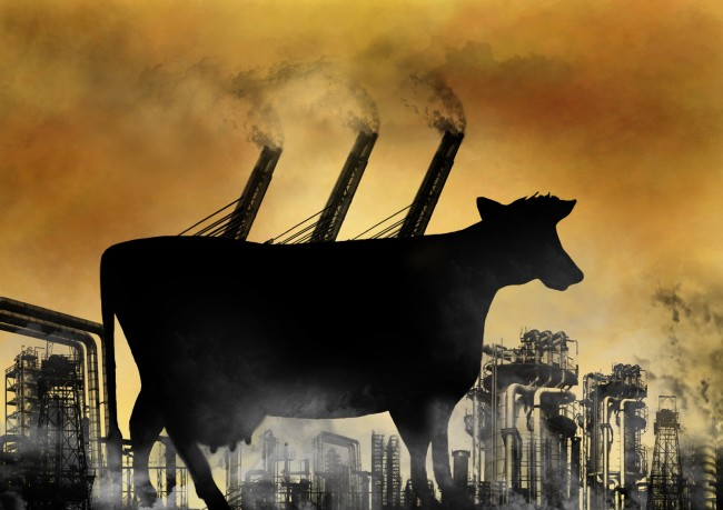 cattle-global-warming-methane-emissions-650x459.jpg
