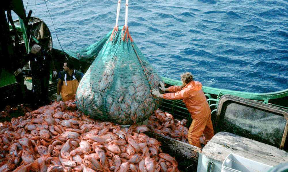 overfishing-overview-08022012-web_109842.jpg