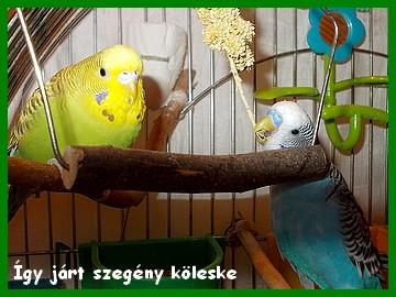 12_12_26_igy_jart_szegeny_koleske.jpg