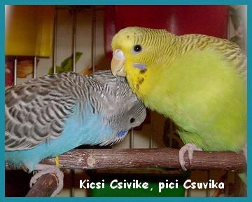 12_08_28_majd_en_vigyazok_rad_csuvika.jpg