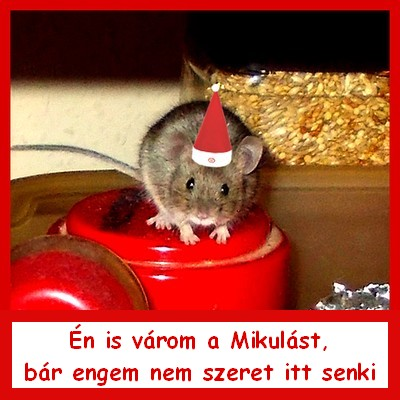 cincike_mikulasa_jav.jpg