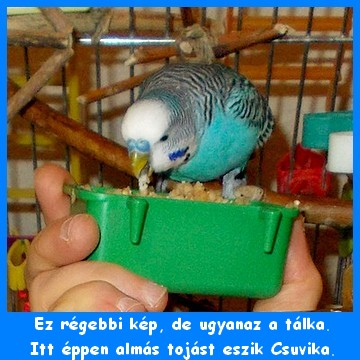 zold_talka_17_02_04.jpg