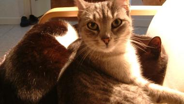 A macska és a víz