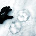 Hogyan fogjunk könnyen hópárducot?