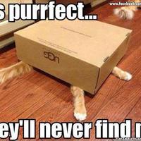 Macskák a dobozban
