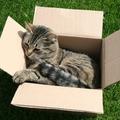 Cukiság: cica és csomagolás