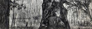 Az őstölgy gyomrában, avagy egy mesebeli zselízi történet