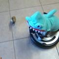 Cápának öltözött macska üldöz egy kacsát