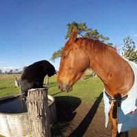 A lovagló macska