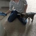 Oskar a vak cica