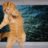 A lebegő macska