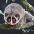 A világ legritkább állata irdatlanul cuki