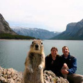 Önportréba pofátlankodott egy mókus