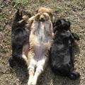 Napozó kutyusok