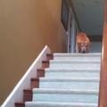 Játék a lépcsőn