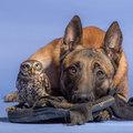 Kutya és bagoly, két jó barát!