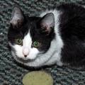 Cicanapló: a macska legjobb barátja a mosógép - PÁLYÁZAT!
