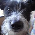 Füge, a szuperorrú menhelyi kutya