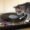 Lemezlovas macska