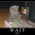 Cuki macskák a Twitter hibaüzeneteiben
