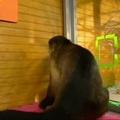 Összefognak a majmok, ha kajáról van szó