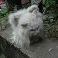 Tündérke, a szárnyas macska