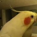 Sunny énekel